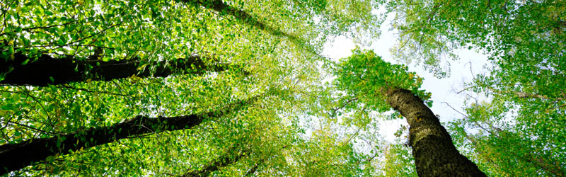 Go Green Header